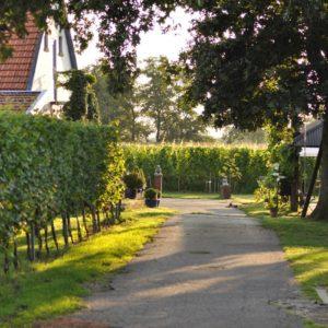 wijngaard Wijnstaete Lemelerveld Overijssel
